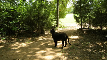 Photo of lucky taking a leash-free walk on the nature trail.