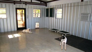 Photo of the dogs inside the cage-free dog boarding facility.