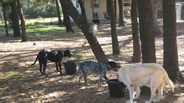 Photo of the dogs getting a refreshing drink under the trees at the dog daycare.