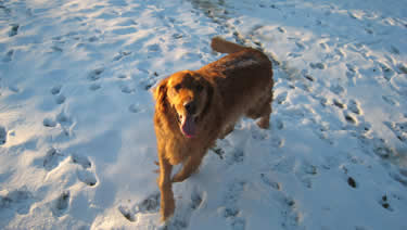 Photo of dog in the snow as it is running around in the cage-free environment of the dog daycare.